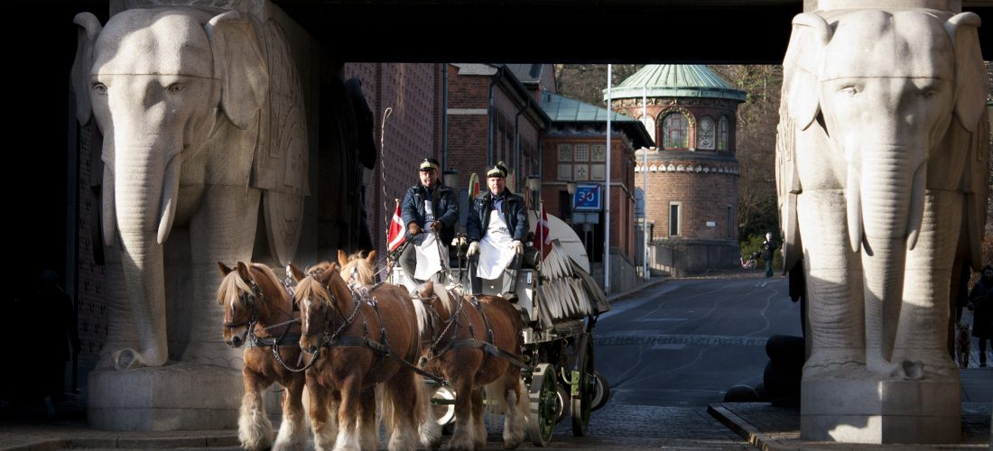 Carlsberg's brewery horses moving to Copenhagen ZOO