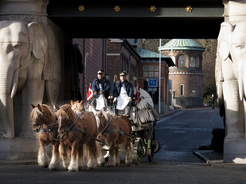 Carlsberg's brewery horses moving to Copenhagen ZOO